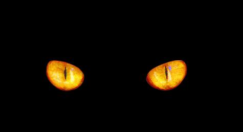 Vidění ve tmě